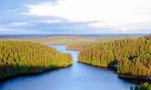 Repoveden_Kansallispuisto_Kesayonauringossa